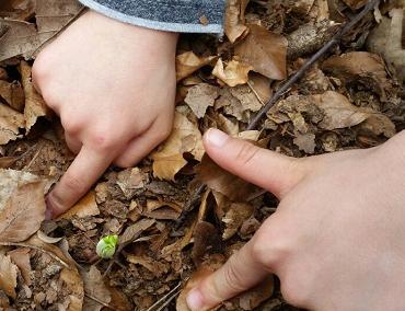 Ein Kind entdeckt den Waldboden