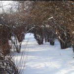 Mit Büschen überwucherter schneebedeckter Weg