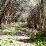 Pflanzentunnel im Familiengarten